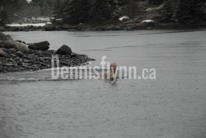 Avondale Dave Polar Bear Dip January 01 2008