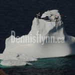 Cougar Helicopter Iceberg